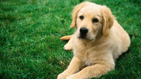 Amistad con el Signo Perro en el año 2015
